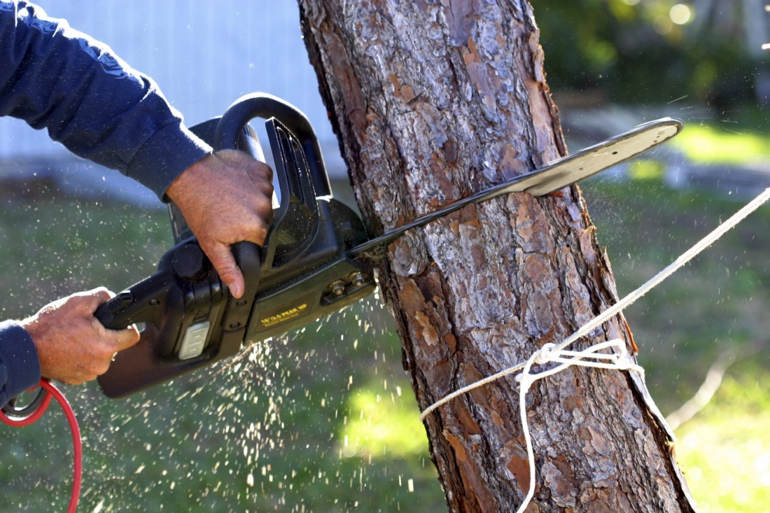 Tree Trimming Company Thousand Oaks CA - removal