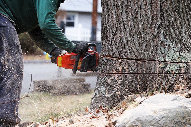 Commercial Tree Service Ojai CA - treeremove