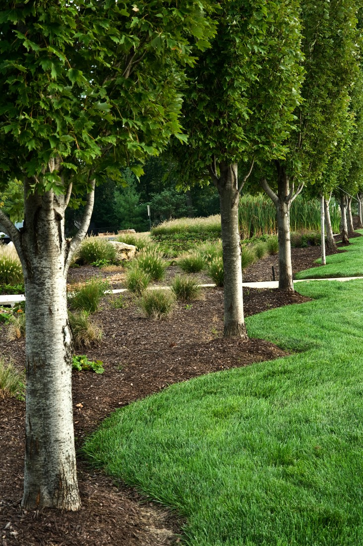 Top-Rated Tree Service Company Newbury Park CA - trees